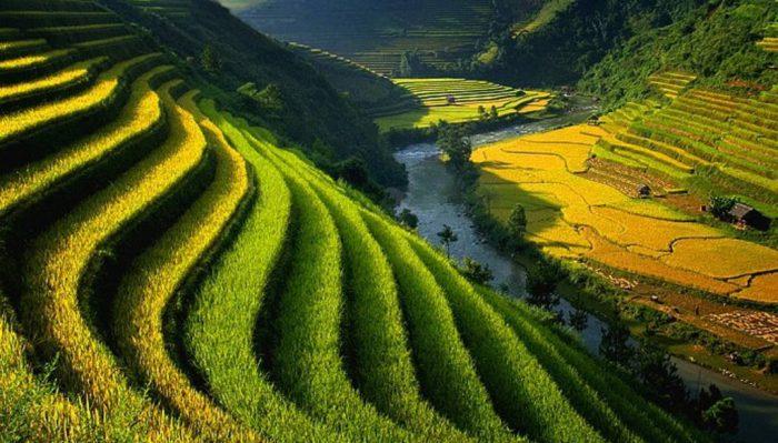 Bài viết về cuộc sống nông thôn bằng tiếng Anh